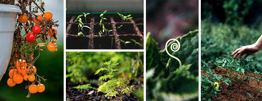 Éviter maladies jardin