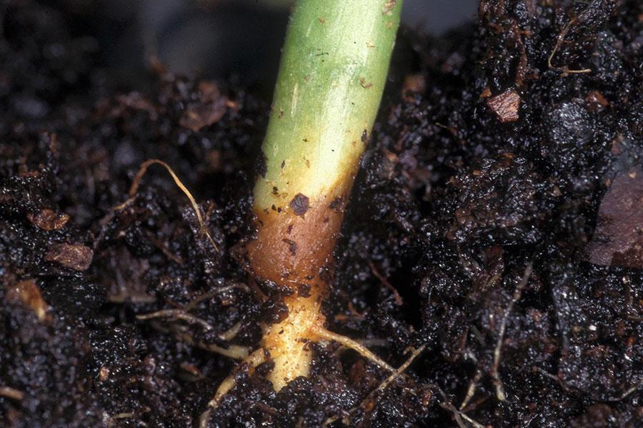 Fonte-des-semis