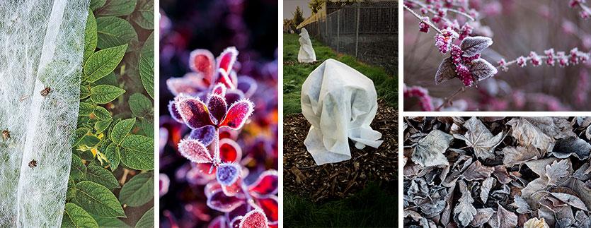 Banniere plantes voile hivernage