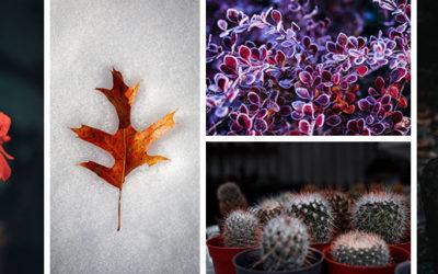 Quelles sont les plantes à protéger l'hiver et comment les arroser ?