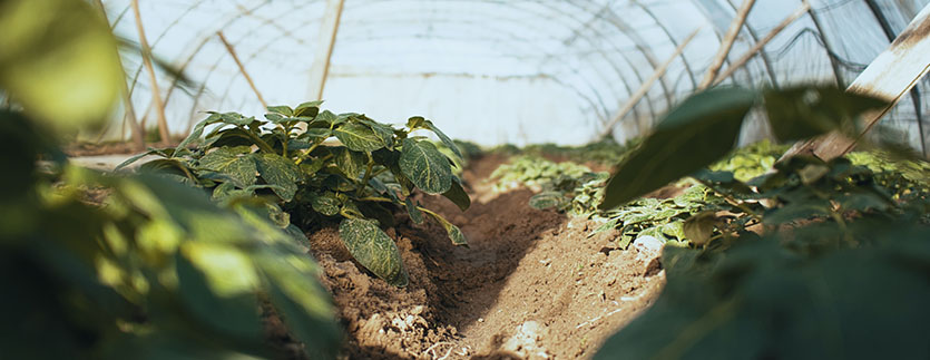 régénérer terre jardin