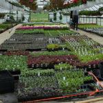 Quel légume planter en hiver sous serre ?