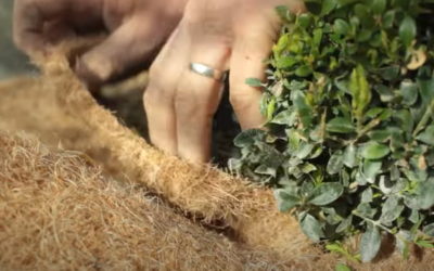 Comment poser une toile de paillage après plantation ?