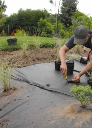 plantation toile de paillage