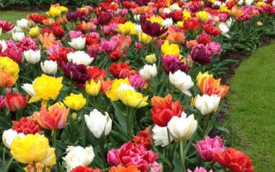 Les 10 fleurs qui annoncent le printemps