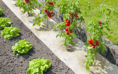 Toile de paillage biodégradable : quels sont les avantages ?