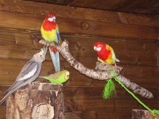 oiseaux becs crochus