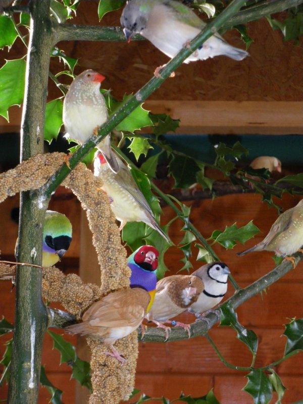 cohabitation-oiseaux