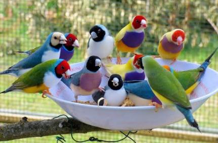 cohabitation oiseaux à becs droits