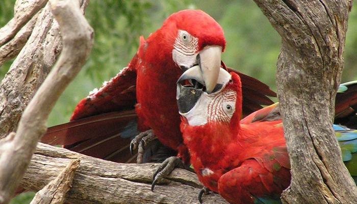 reproduction oiseaux