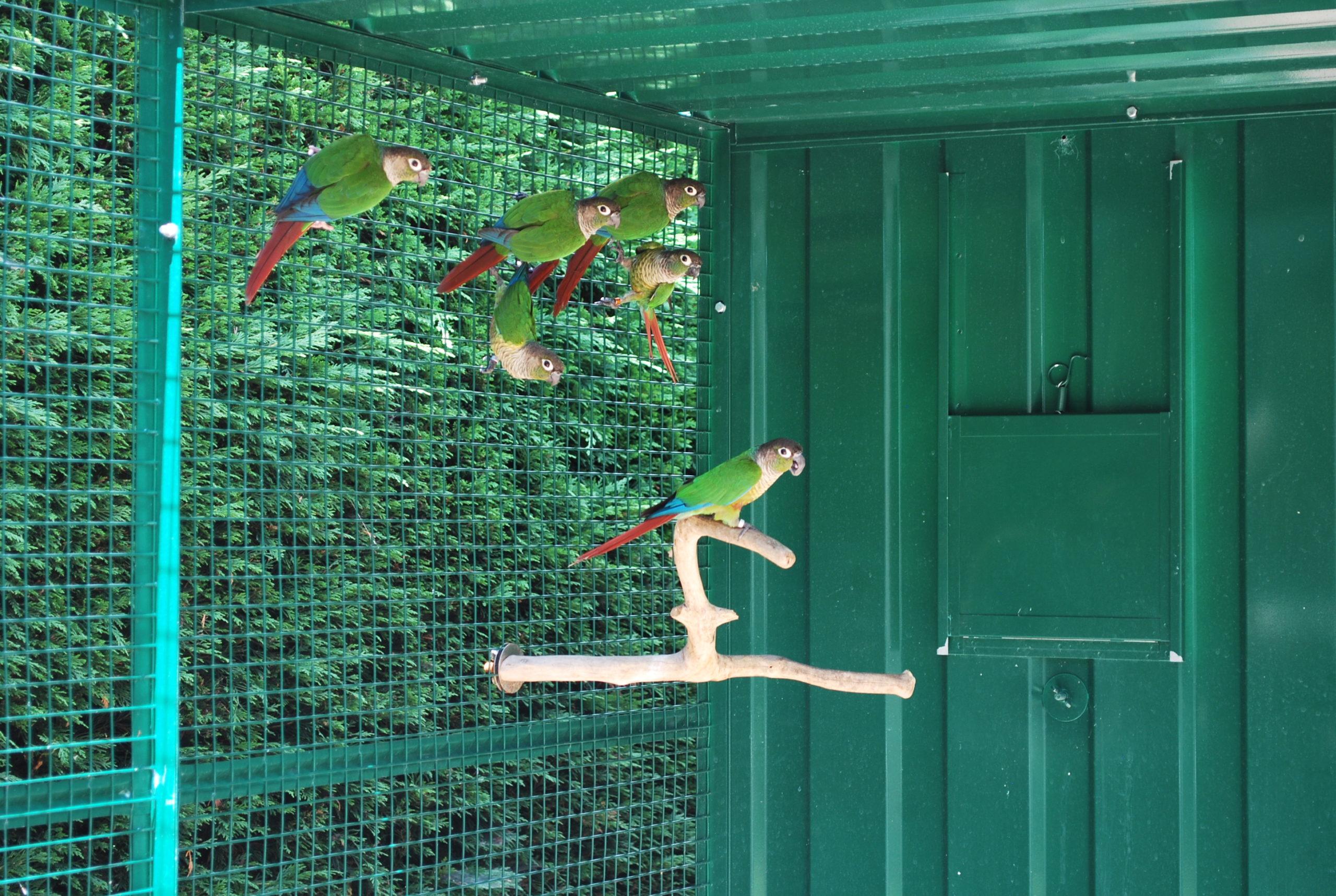 volière perroquet