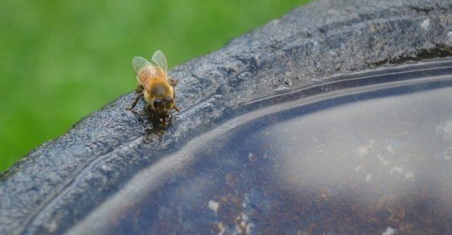 Point-deau-pour-abeilles-640×333