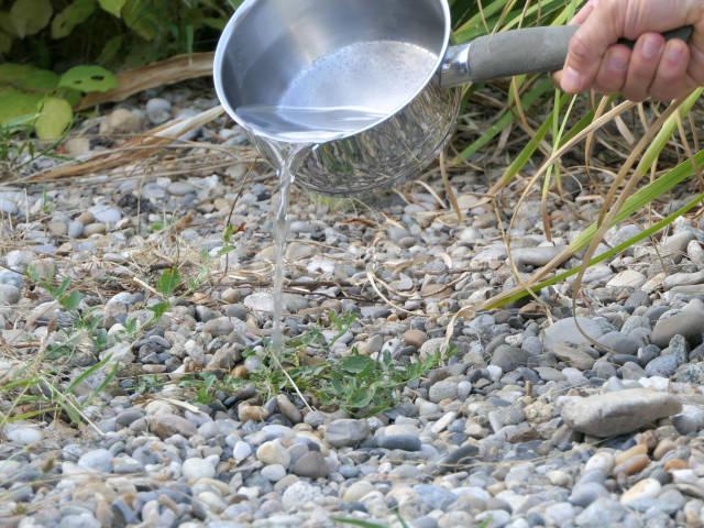 désherbage eau de cuisson