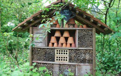 Nos 6 astuces pour attirer les insectes dans votre jardin