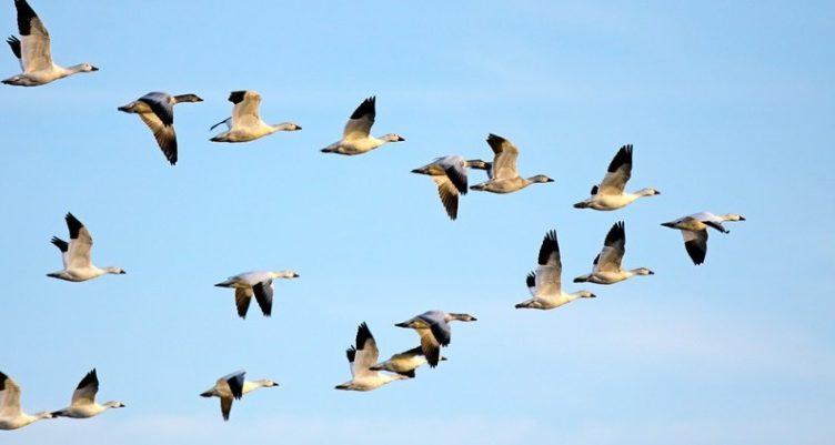 oiseaux-indicateurs-environnement