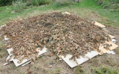Comment empêcher les mauvaises herbes de pousser dans son jardin ?