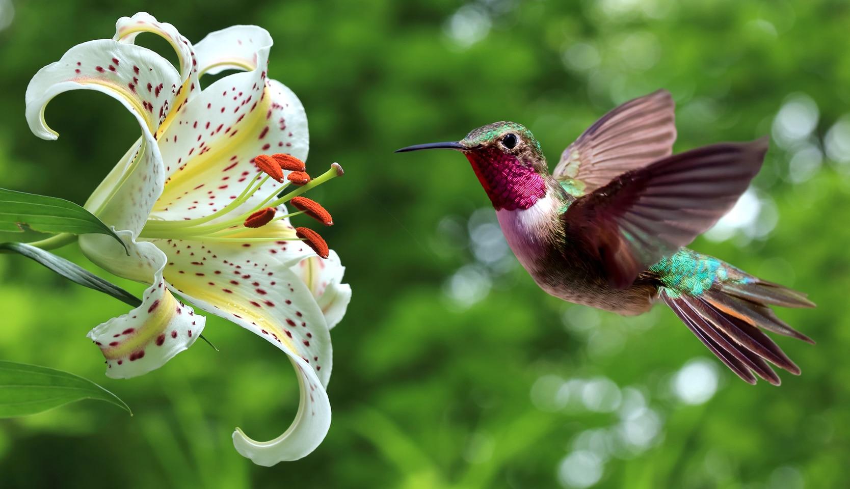 pollinisation jardin