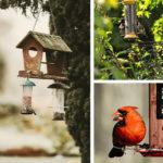 Nourrir les oiseaux bannière avec oiseaux qui mangent