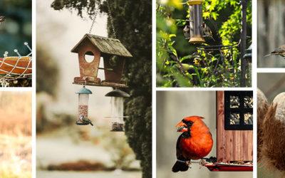 Où placer les mangeoires à oiseaux ?
