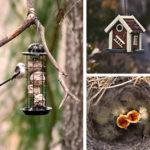 Pourquoi nourrir les oiseaux