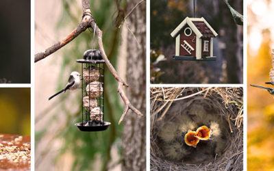 Pourquoi nourrir les oiseaux ?