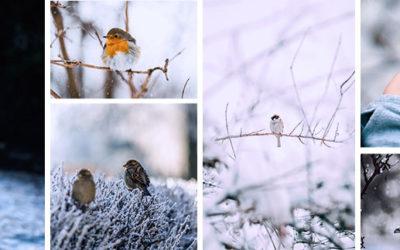 Comment nourrir les oiseaux du jardin en hiver ?