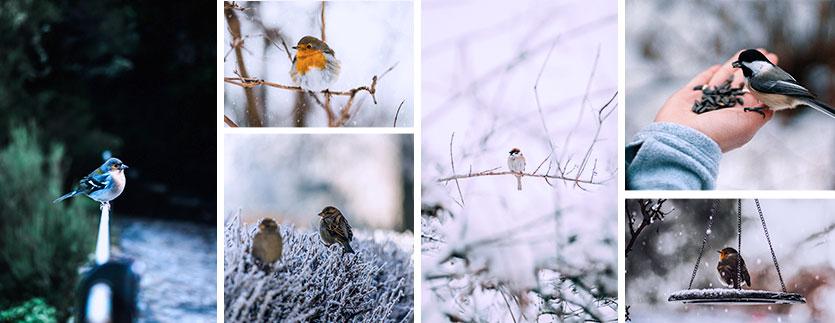 Plusieurs oiseaux en image de fond dans la neige