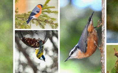 Quels sont les oiseaux utiles pour le jardin ?