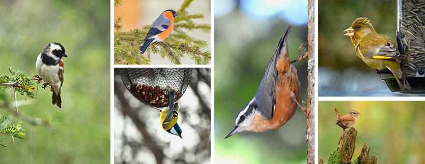 Image de fond oiseaux utiles au jardin