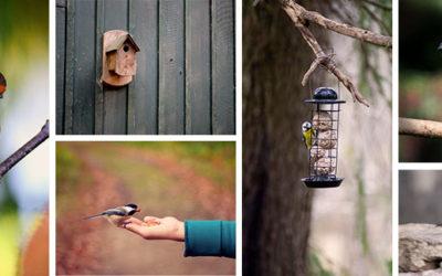 Quand faut-il arrêter de donner de la nourriture aux oiseaux ?