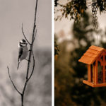 Image de fond avec plusieurs oiseaux