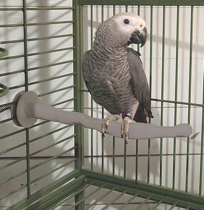 perchoir-chauffant-perroquet