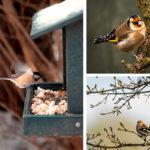 Bannière photos d'oiseaux