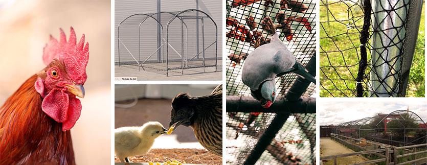 Image de fond avec des oiseaux