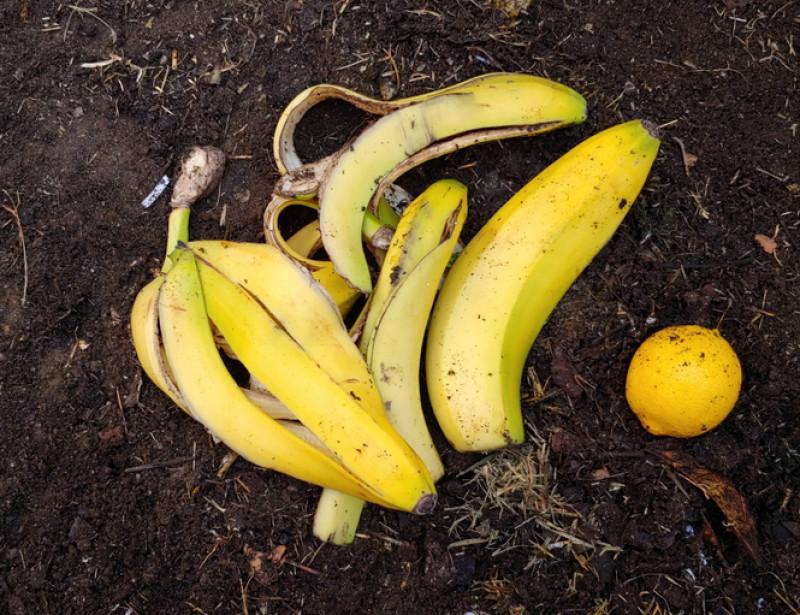 epluchure-banane