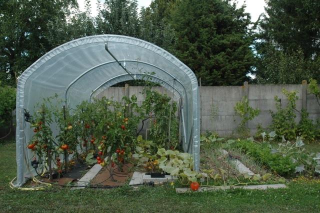 Abri à tomates