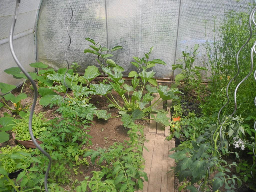 comment cultiver des tomates sous serre de jardin. Black Bedroom Furniture Sets. Home Design Ideas