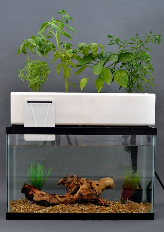 cultiver des l gumes bio gr ce aux poissons avec l aquaponie blog jardin couvert conseils. Black Bedroom Furniture Sets. Home Design Ideas