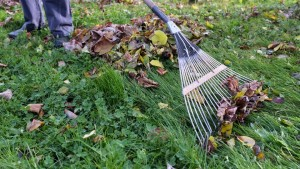 balai feuilles mortes