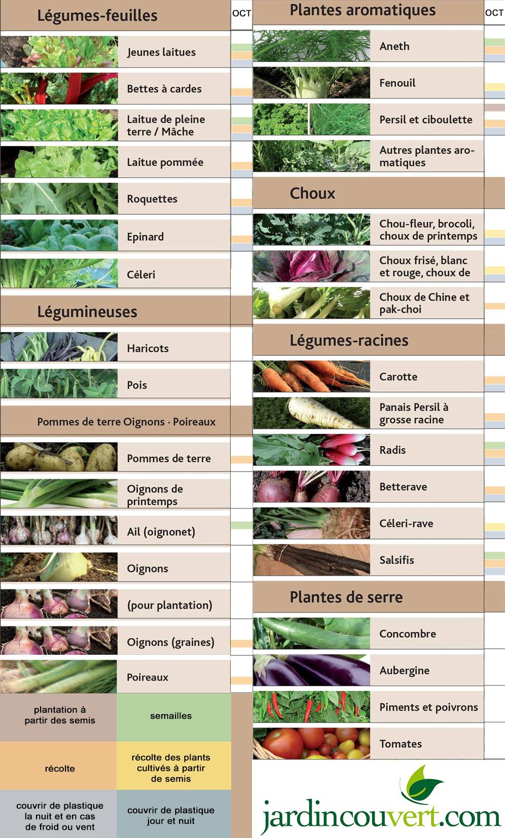Calendrier de plantations et semis au potager en octobre