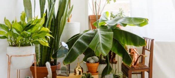 plante intérieure