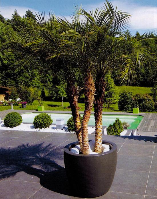 Pot Chapelu accueillant un palmier - Pots et jardinières