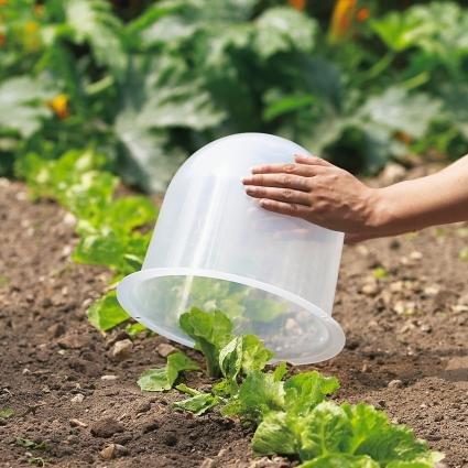 Quels sont les travaux de jardinage faire en d cembre for Blanchir legumes pour congeler