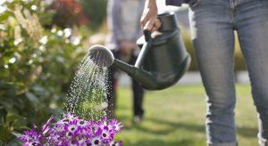 arroser fleur jardin
