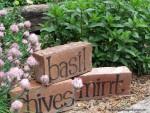 Briques au potager