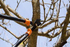 entretenir arbres fruitiers