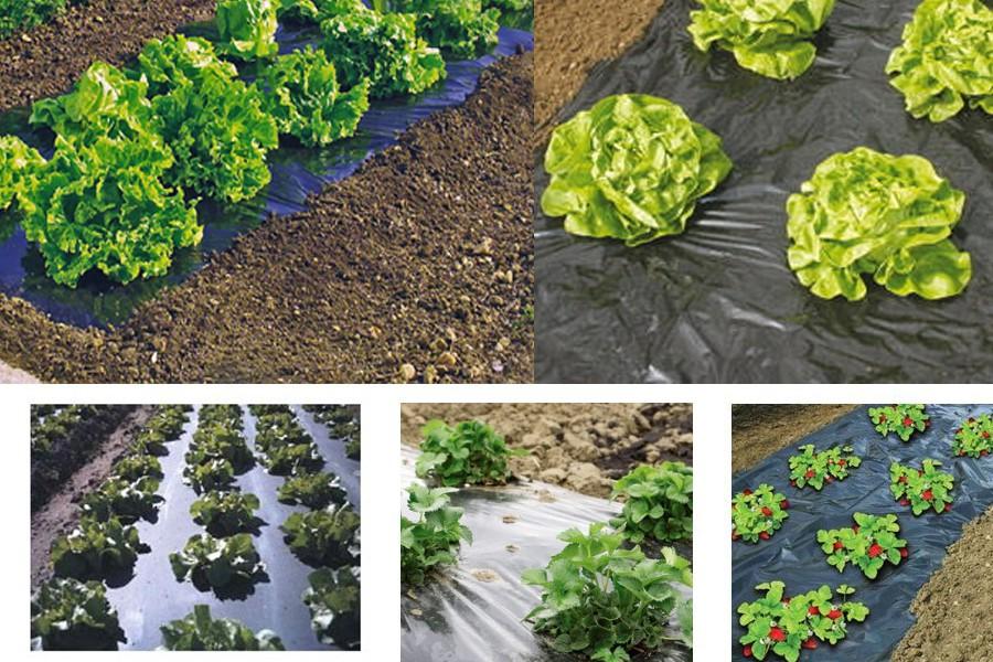 Film de paillage pour légumes