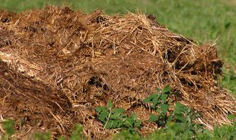 Fumier de cheval pour l'amélioration du sol