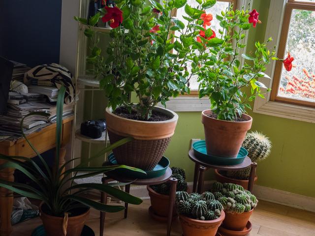 Nos conseils pour rentrer vos plantes d 39 ext rieur avant l for Plantes exterieur hiver