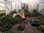 Serre Richelieu - Légumes et fleurs sont de mise